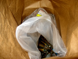 Oh, lobsters.  Innocently enjoying their paper bag.